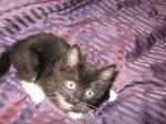 Bimfee kitten